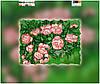 """Схема для вышивки бисером """"Розы"""", на холсте А4"""