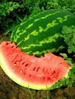 Семена арбуза Фарао F1 (Syngenta) 1000 семян - (65-70 дней), удлиненной формы, СЛАДКИЙ! вес 15-18 (до 35) кг