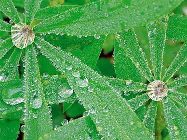Какой водой нужно поливать комнатные растения?