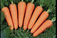 Морковь Каскад   F1  1 гр