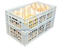 Пластиковые ящики для перевозки яиц 660x360x366, фото 1