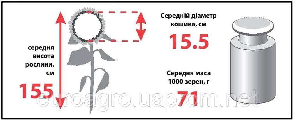 Семена подсолнечника ЛГ 5635 (LG 56.35), фото 2