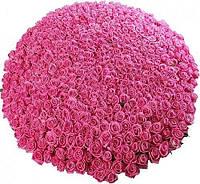 Букет 500 роз