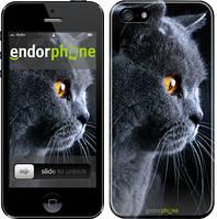 """Чехол на iPhone 5 Красивый кот """"3038c-18"""""""