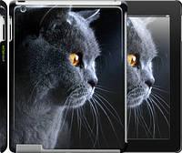 """Чехол на iPad 2/3/4 Красивый кот """"3038c-25"""""""