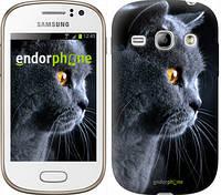 "Чехол на Samsung Galaxy Fame S6810 Красивый кот ""3038u-254"""
