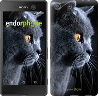 """Чехол на Sony Xperia M5 Красивый кот """"3038c-217"""""""