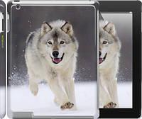 "Чехол на iPad 2/3/4 Бегущий волк ""826c-25"""