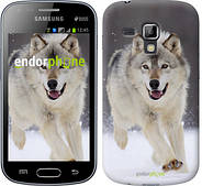 "Чехол на Samsung Galaxy S Duos s7562 Бегущий волк ""826c-84"""