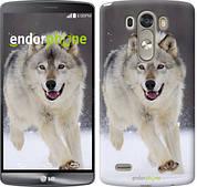 "Чехол на LG Nexus 5X H791 Бегущий волк ""826u-150"""