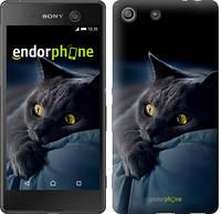 "Чехол на Sony Xperia M5 Дымчатый кот ""825c-217"""