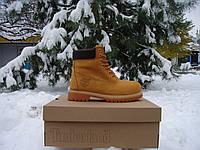 Женские зимние ботинки Timberland 6 inch Winter Fur. (тимберленд 6 инч на меху) медовые