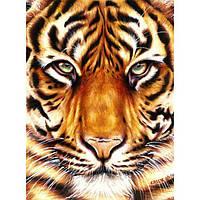 Картины по номерам - Сила тигра