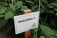 Перец Мазурка F1 100 семян, фото 1
