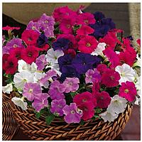 Петуния Пикобелла F1 (смесь) ранняя мелкоцветковая со множеством цветков устойчива к погоде (20 сем. в пачке)