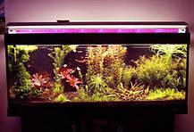 Лампа для фитоосвещения Т8 SL-10F 10W G13 220V (fito spectrum led) Код.58823, фото 3
