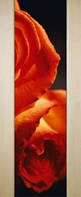 Дверь межкомнатная Премьера с фотопечатью на стекле, фото 1