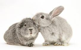 Кролики та гризуни