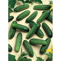 Семена огурца / Мирабелл F1(Seminis) 250 семян - партенокарпик, ультра-ранний гибрид (40-45 дней)