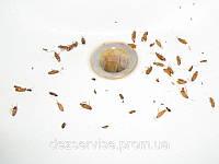 Борьба с домашними тараканами