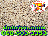 Сульфат Аммония гранулированный (удобрение) мешок 50кг NS 21-24 (лучшая цена купить) пр-во Украина.