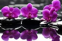 Алмазная мозаика Изысканные орхидеи