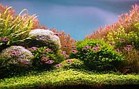 Чистка и обслуживание аквариума