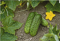 Огурец Караоке F1 10 семян, фото 1
