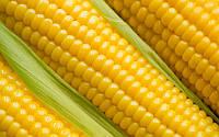 Кукуруза сахарная Суперсладкая средне ранний сорт засухоустойчивый, для консервирования -заморозки