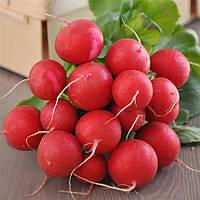 Редис Кримсон Гигант вкус приятный без горечи, хрустящий, сочный сорт не образующий пустот в плодах