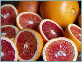 Апельсин Моро (Citrus sinensis cv. Moro) до 20 см. Комнатный