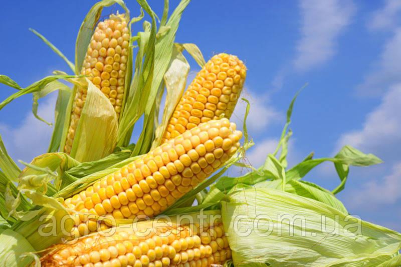 Семена кукурузы ВН 63, ВНИИС