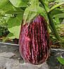 Баклажан Лейре F1 100 семян