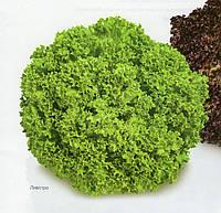 Салат Левистро 1000 семена