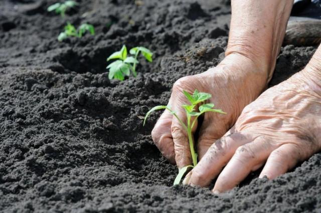 Ученые нашли эффективную замену мочевине в качестве удобрений