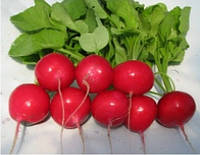Редис Сора скороспелая отличных вкусовых качеств сорт переносит низкие температуры стрессы