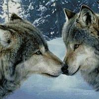 Алмазная вышивка Чувства волков