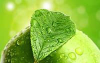 Зеленое яблоко с мятой - жидкость для э.сигарет