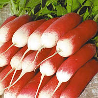 Редис Французский завтрак весовые семена для выгонки корнеплодов товарного качества для реализации