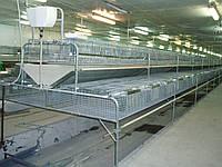 Клітка для кролів откормочная 108 голів ДО -1,5 фермерська .