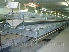 Клетка для кролей откормочная 108 голов   КО -1,5 фермерская .