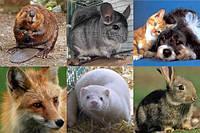 Все виды животных