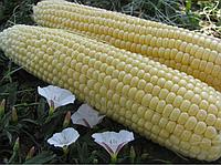 Семена кукурузы сахарной Тести Голд F1 Аgri Saaten 5 000 шт