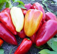 Семена перца Бихар F1 Lark Seeds 500 шт