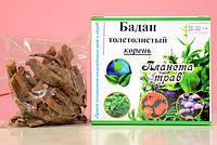 Бадан толстолистный лекарственный корень