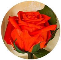 Неувядающая долгосвежая живая роза FLORICH-  Огненный Янтарь 5 карат