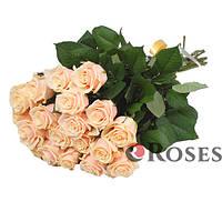 Талея 19 кремовых роз