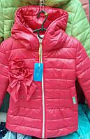 Яркая курточка для девочек Бантик 11342