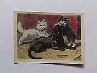"""Открытка """"Такса и котята"""". Цензура. Сигнальный экземпляр. 1940 год"""