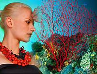 Очарование и тайны коралла